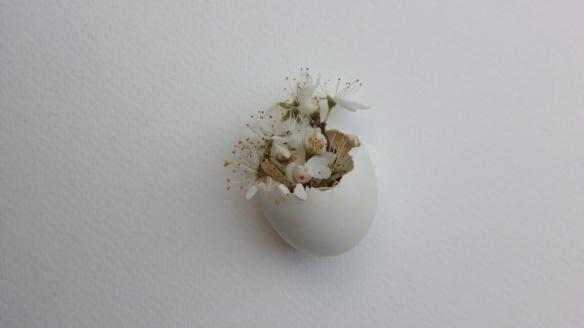 SAMV_Egg